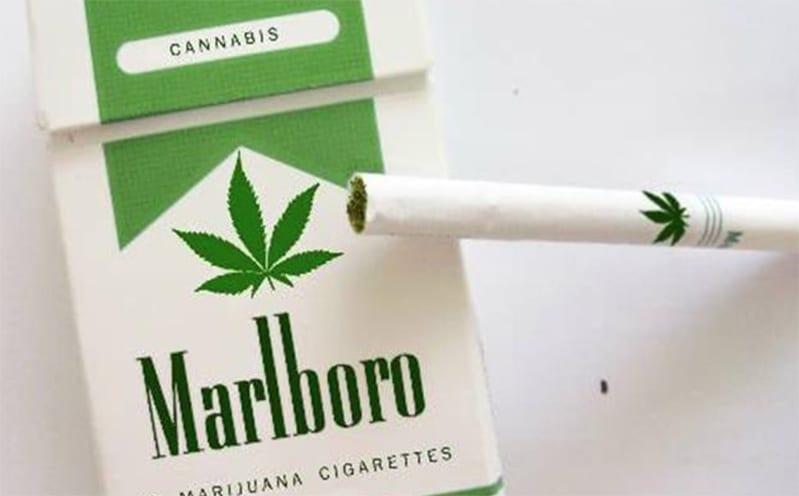 big-marijuana
