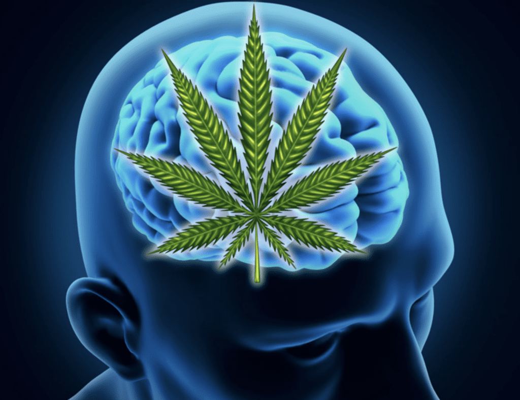 Teens Turn To Marijuana To Self-Medicate For Stress, Anxiety ...